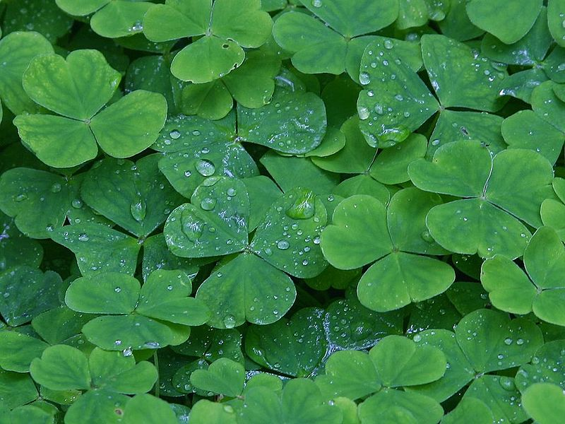 Three Wishes, Paula Millhouse, St.Patrick's Day, Leprechaun in Love