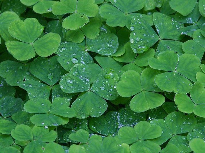 Three Wishes, Paula Millhouse, St.Patrick's Day, Leprechaun in Love